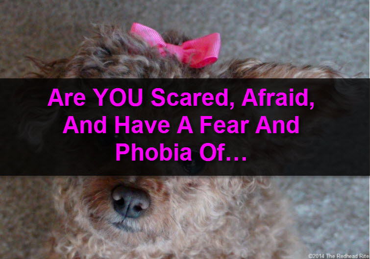 Cynophobia fear of dogs tw