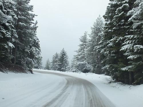 Hó meg fagy, meg fenyőfa, meg jeges út. Se teve, se pálmafa, se strand