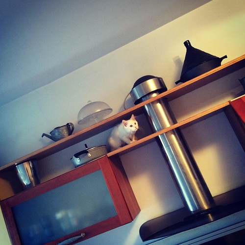 Ho coperto gli scaffali alti della cucina:) I've discovered the top shelves in the kitchen:)