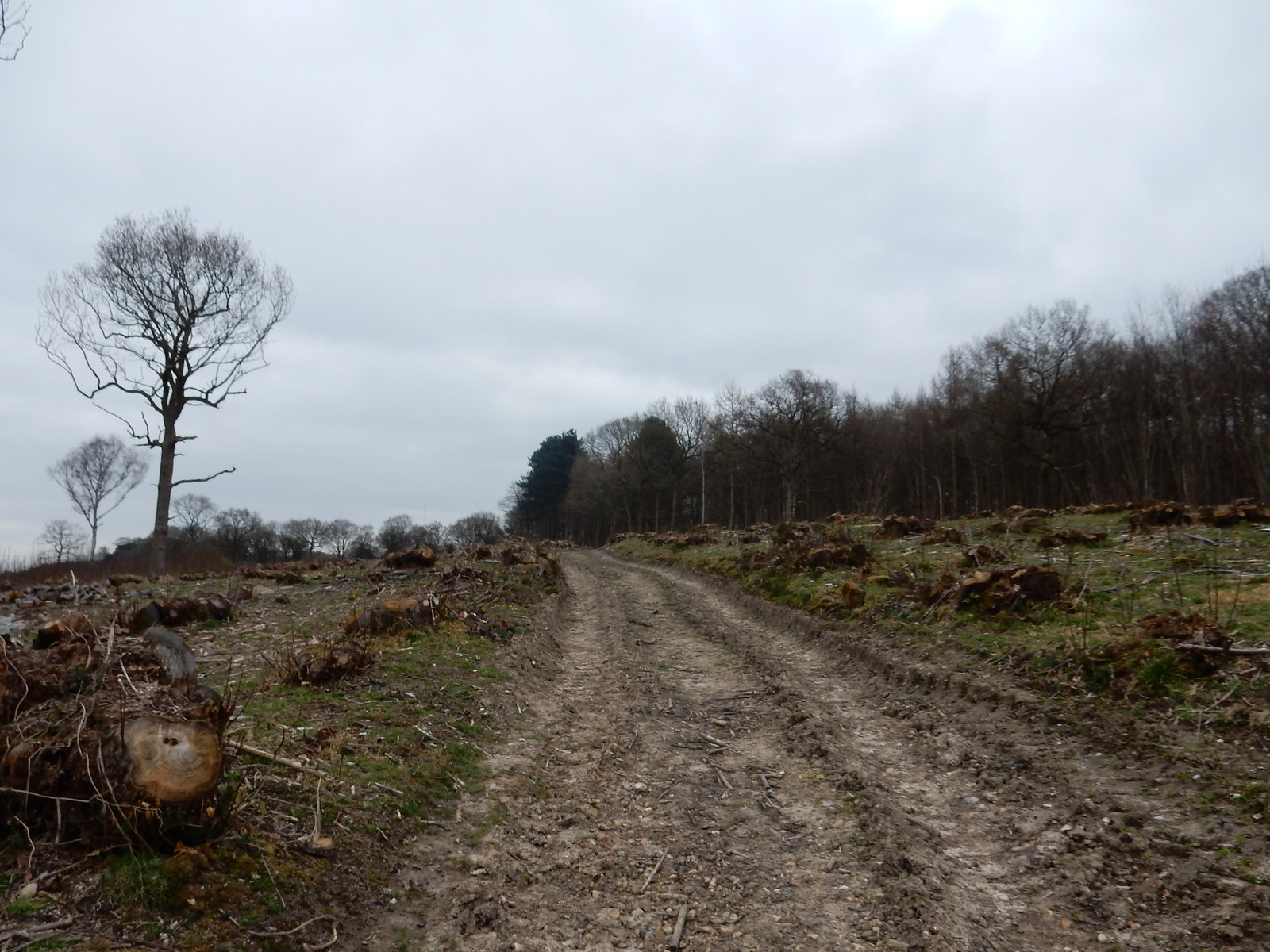 Recent Coppice Sturry Circular