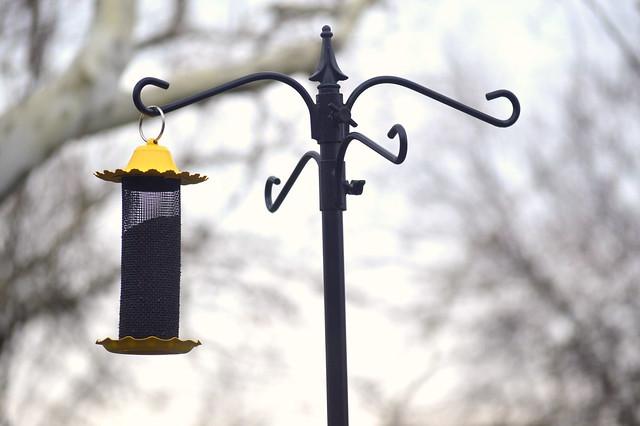 Finch feeder