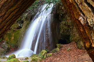 Falls among the trees