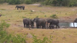 3.29.2015_329amest_See Baby Elephant