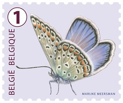 19bis h Icarusblauwtje