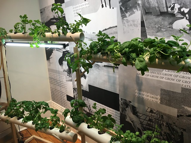 The Gladstone Hotel - Grow Op