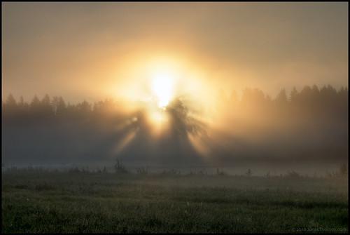 morning field grass fog forest sunrise linda skog soluppgång morgon åker dimma gräs