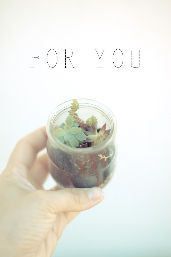 DIY mini terrarium