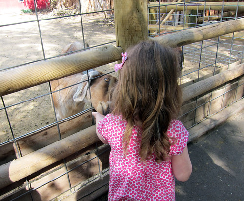 Boise zoo 5-5-13