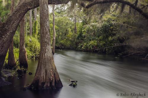 longexposure nature water florida kissimmee cypresstree kissimmeeflorida shinglecreek sigma1750mmf28 canon550d singhrayvarinduond