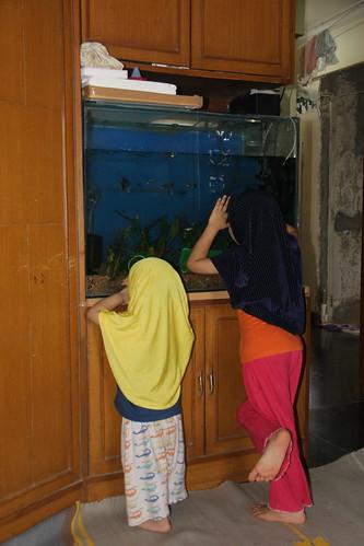 Marziya Shakirs New Fish Tank by firoze shakir photographerno1