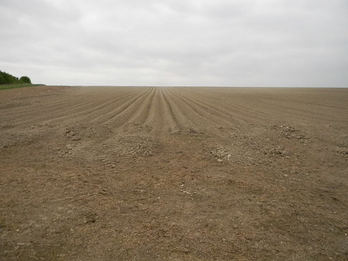 Big ploughed field