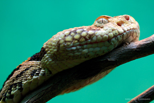 Macro Snake