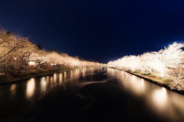 Cherry Blossoms at Night -夜桜-