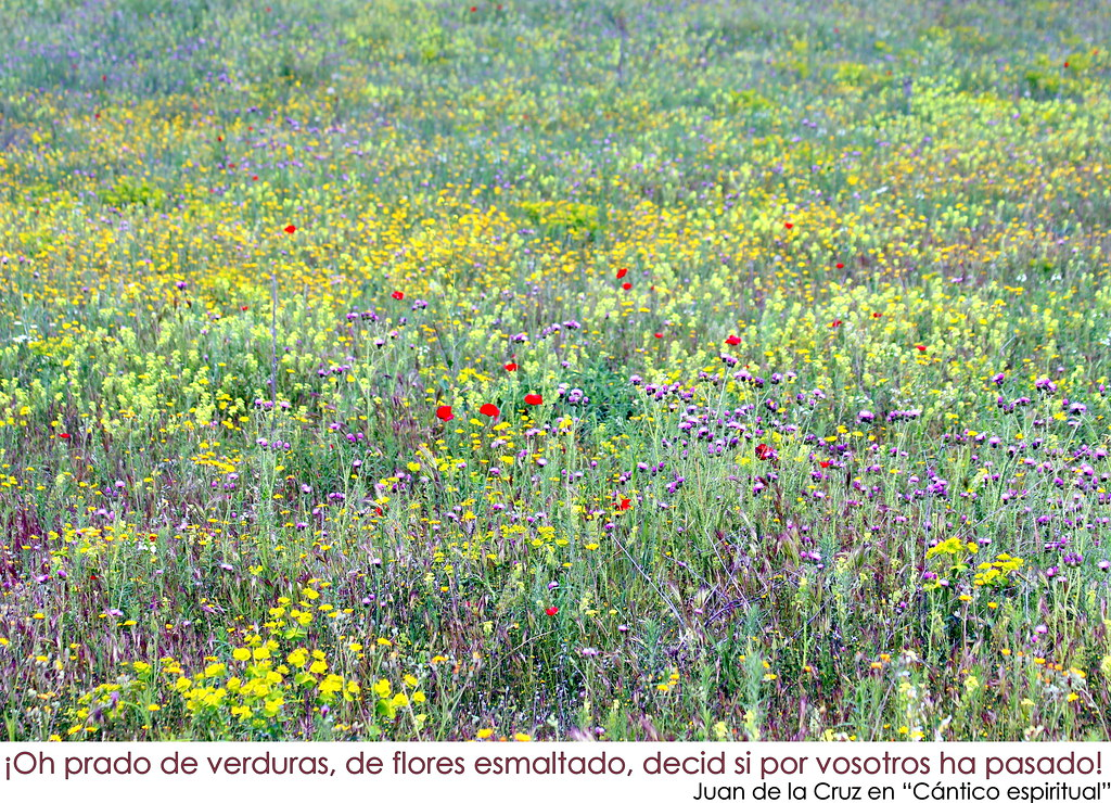 Flores silvestres en Valdemoro