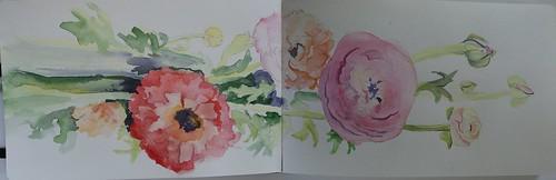 Watercolour of Flowers (Ranunculus)