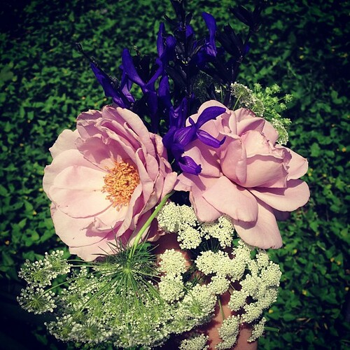 A bouquet from my garden: Violet's dead baby girl roses, black & blue sage, Queen Anne's lace.