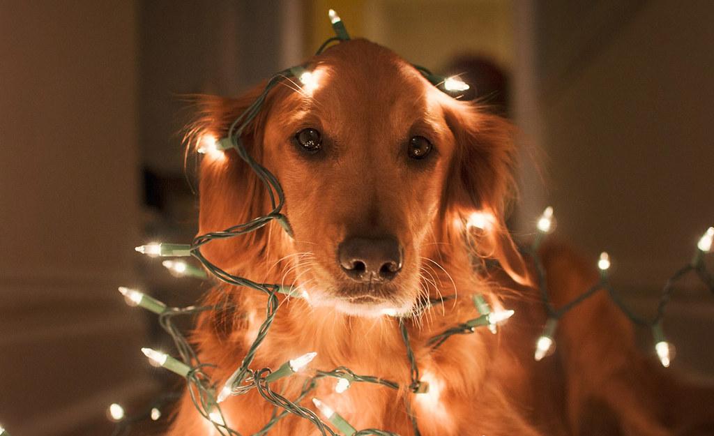 Navidad, familia y la presión que conlleva