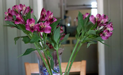 Flowers From Alan - May 12th Purple Alstroemerias