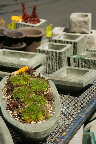 succulent planter  3370
