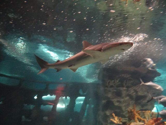Cleveland Aquarium Shark Flickr Photo Sharing