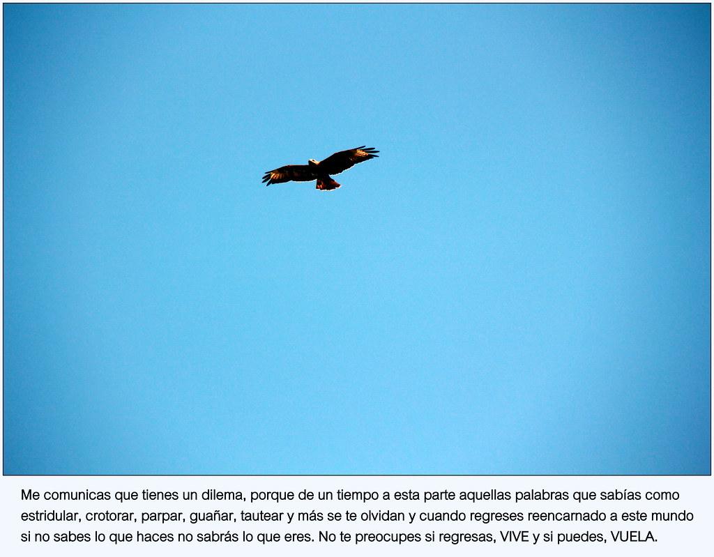 Vivir, volar...