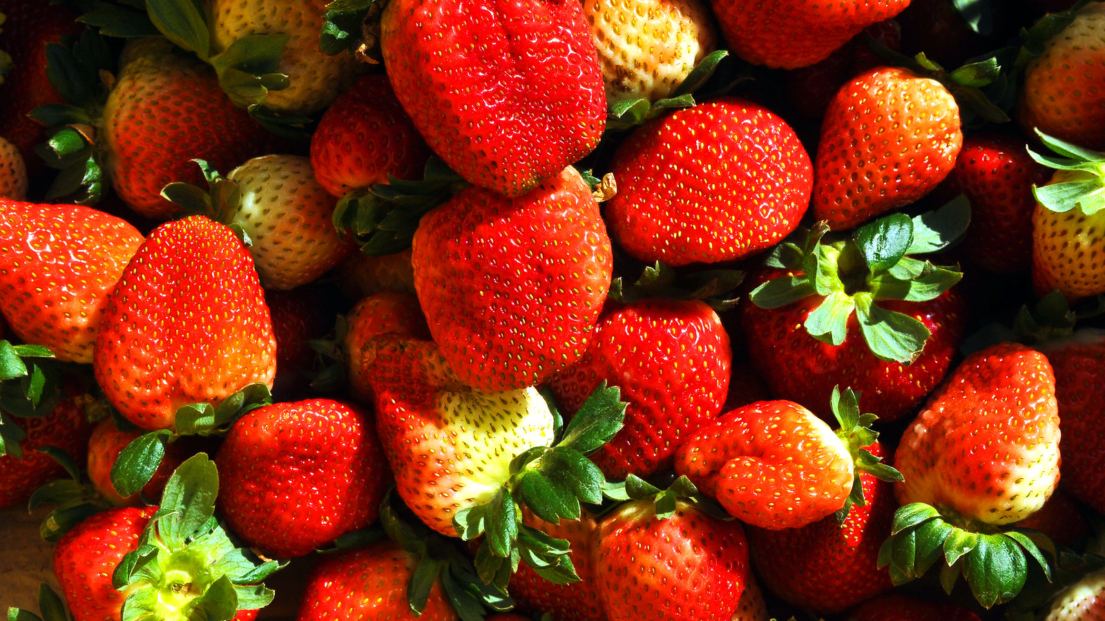 Vendemos todas las fresas (Video)