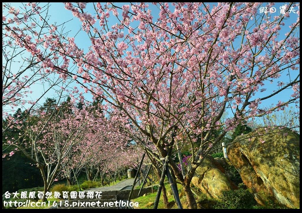 台大鳳凰自然教育園區櫻花DSC_5969