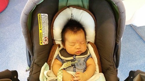 Parker at 6 Weeks Old | shirley shirley bo birley Blog