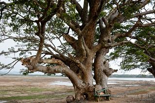 Sri Lanka. Tissamaharama.