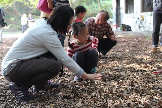 親子一起觸摸落葉層下的土壤,感受土壤的濕潤涼爽以及所創造的微氣候環境。