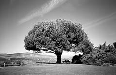 Serra Cross Park - Ventura, Ca.