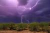 Arizona Heat