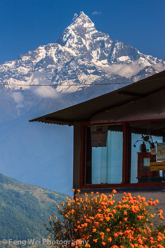 travel nepal flower color tourism window beautiful vertical landscape scenery asia outdoor scenic np annapurnacircuit annapurna himalayas breathtaking gandaki machhapuchhare machapuchare dhampus westernregion machhapuchchhre annapurnaconservationarea annapurnasancturarytrek