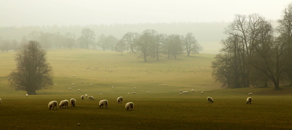 Sheep, trees, mist……. by catkin314