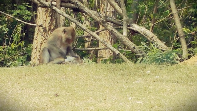 lots of monkeys at Royal Ratchaburi