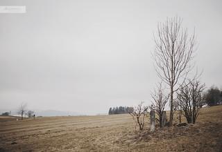 a grey spring day