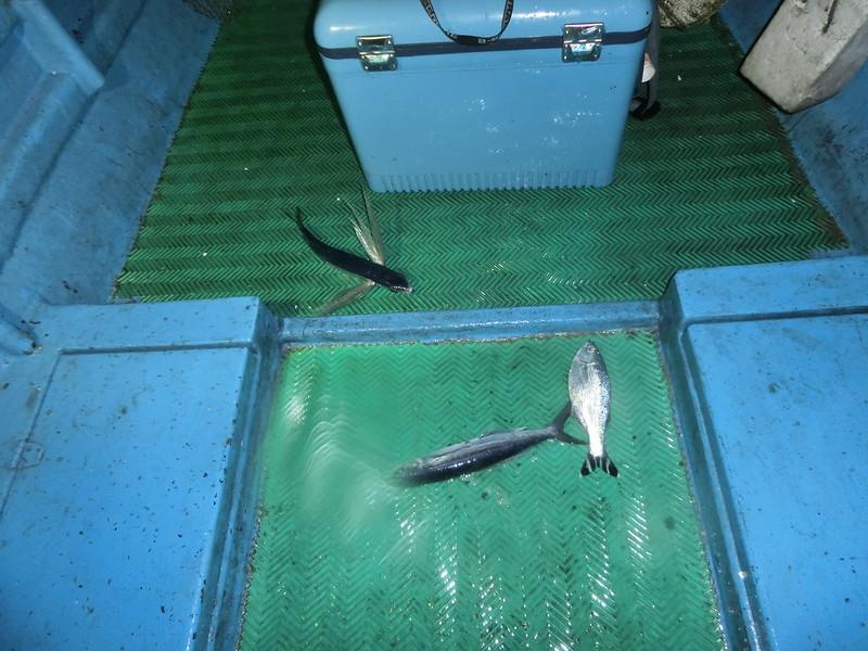 17度C環島-蘭嶼飛魚季體驗- (21)