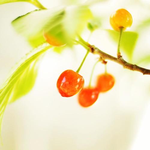 今年もサクランボの季節。 #cherry #cherries #fruit #spring