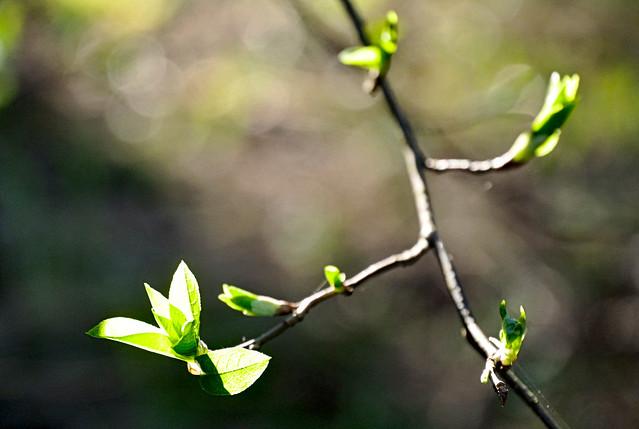 Kevät_2016-28
