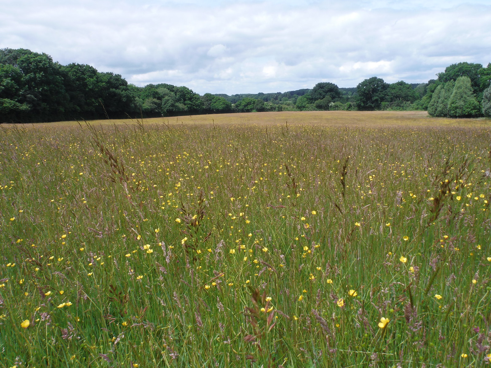 Meadow near Frenchmoor SWC Walk 265 - Dean to Mottisfont & Dunbridge