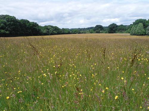 Meadow near Frenchmoor