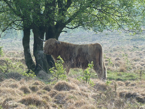 Farley Moor, Matlock ...
