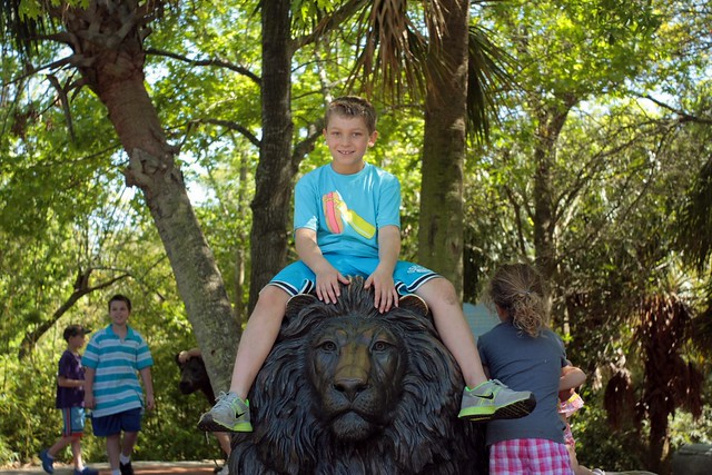 alex on the lion