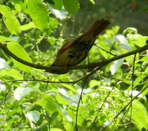 nature notesDSCN6890