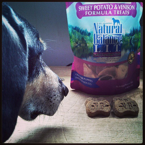 Guess what we're reviewing today? #review #dogtreats #dogstagram