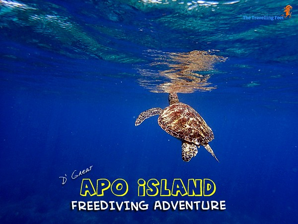 the great apo island freediving adventure
