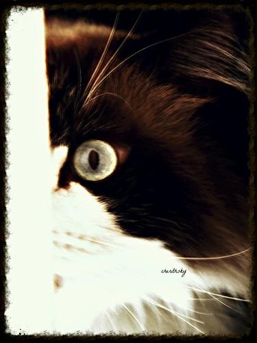 Peek a boo by cherithsky