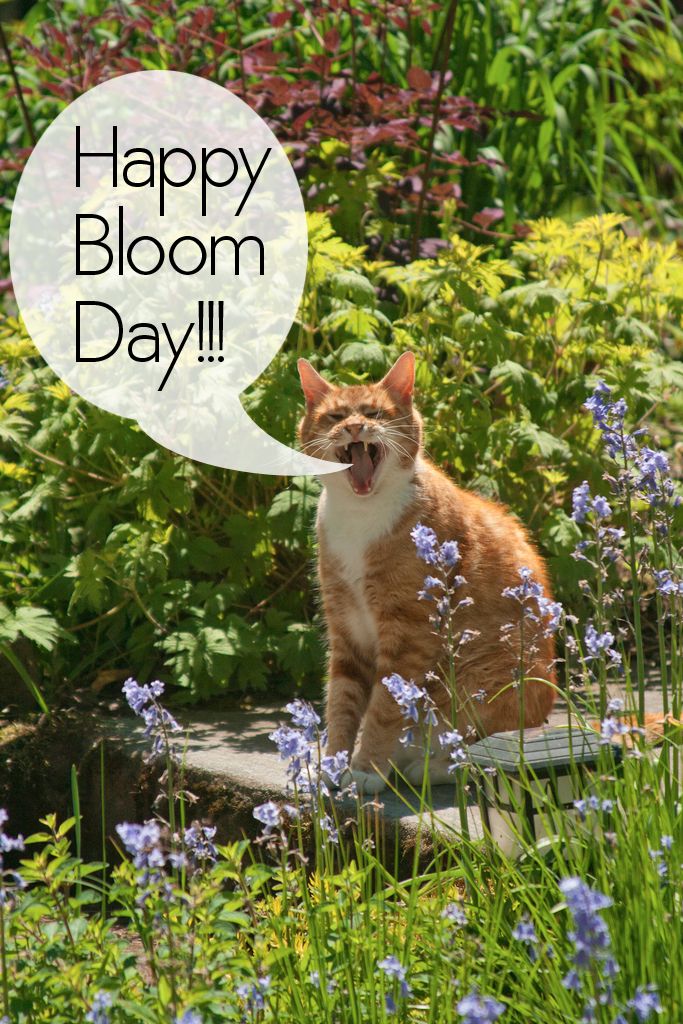 BloomDayBoot