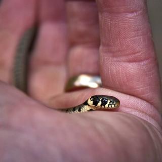 A Very Tiny Snake