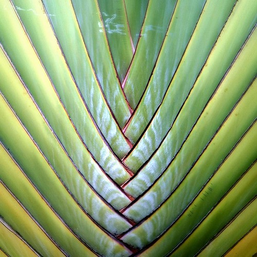 nature pattern by Fotosia